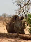 africa close up rhino