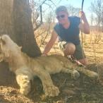 africa stroke lion
